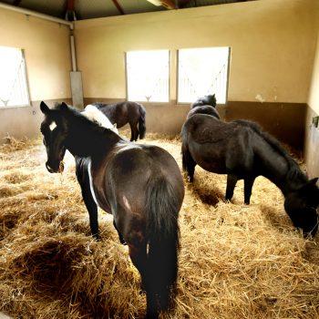 pole-international-du-cheval-deauville-boxes-poney